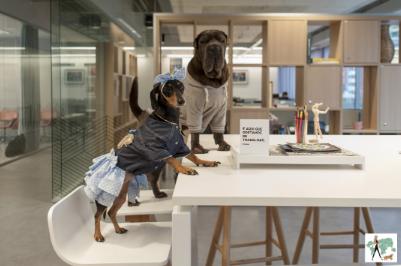 dois cachorros na mesa