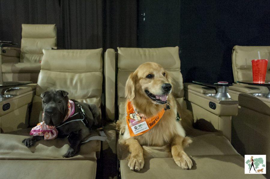 cachorros sentados dentro de sala de cinema