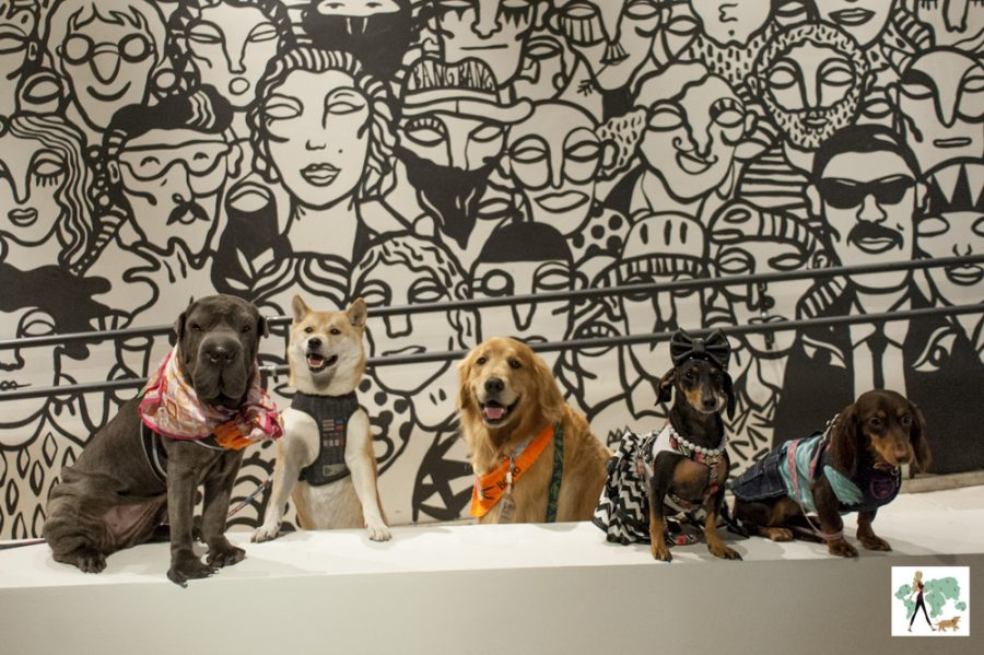 cachorros no Cine Pets