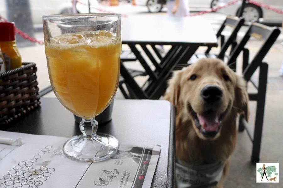 cachorro ao lado de suco de laranja