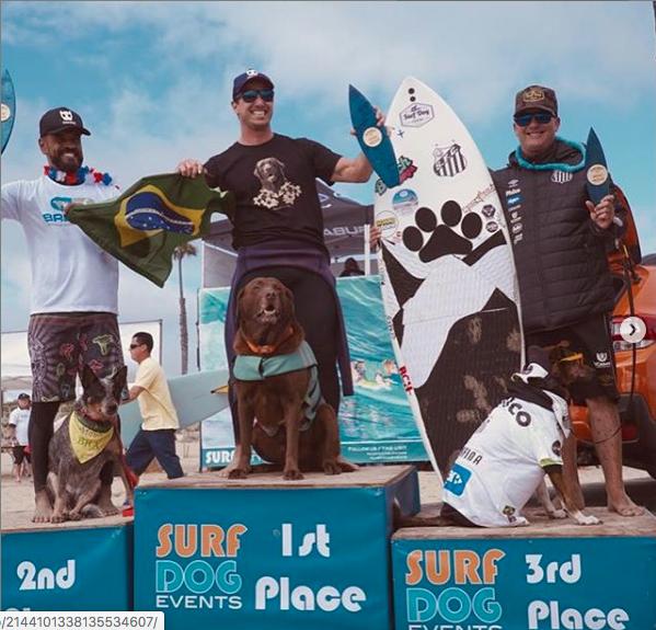 cachorros surfistas no podium