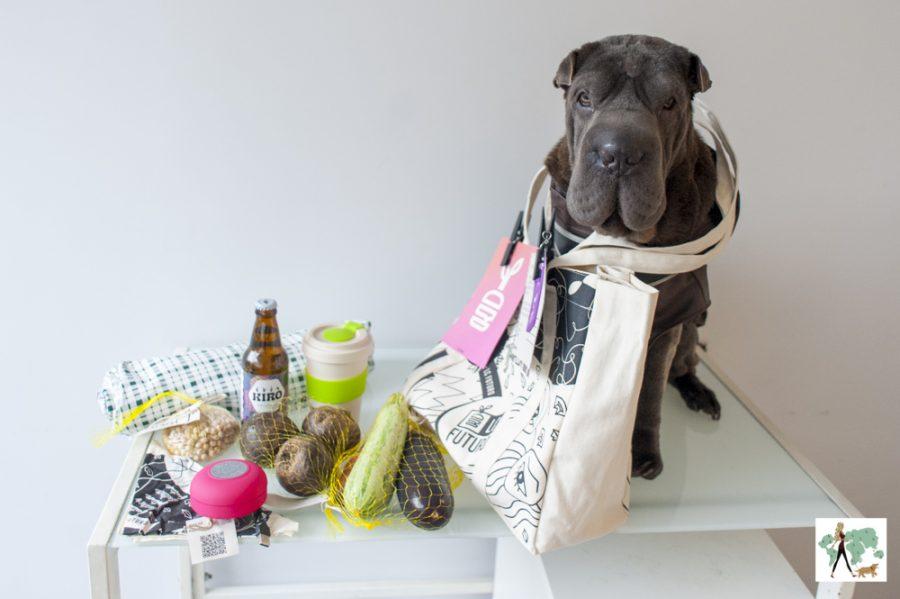 cachorro em cima de mesa com kit da LC Futuro