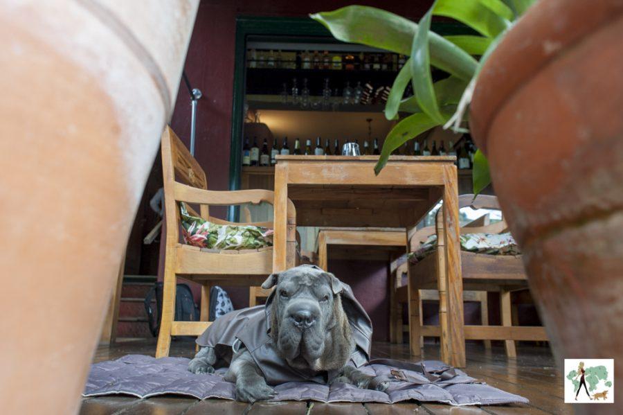 cachorro deitado em varanda do Antonietta