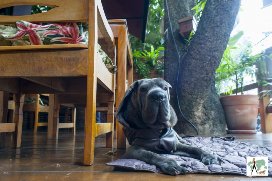 cachorro deitado em varanda de restaurante Antonietta