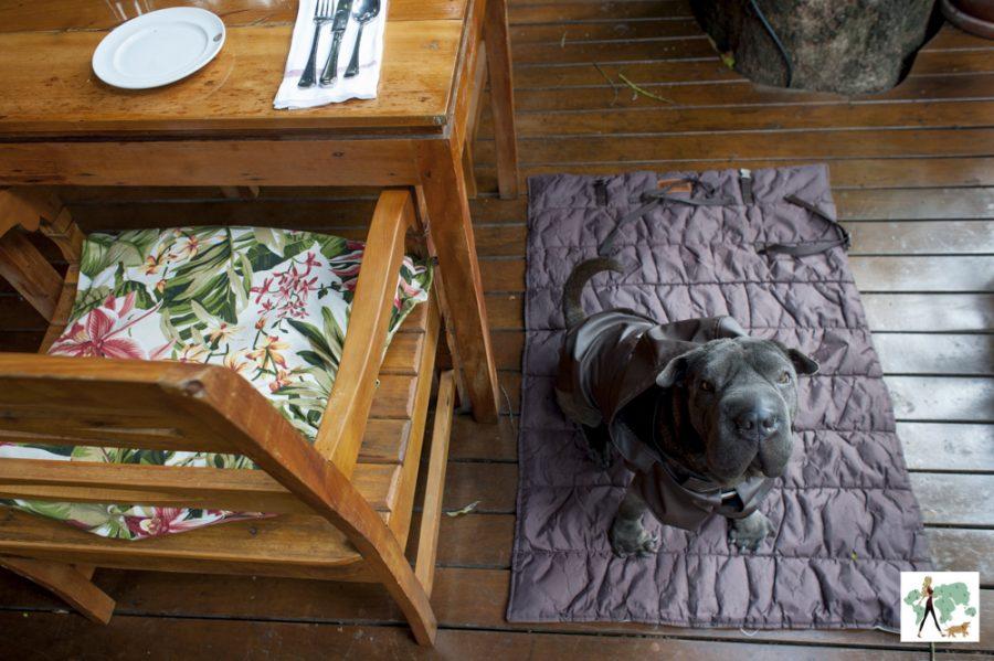 cachorro sentado em varanda de restaurante pet friendly