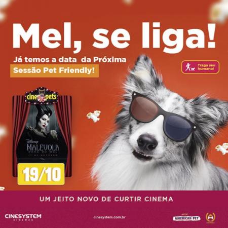 cachorro com oculos de cinema