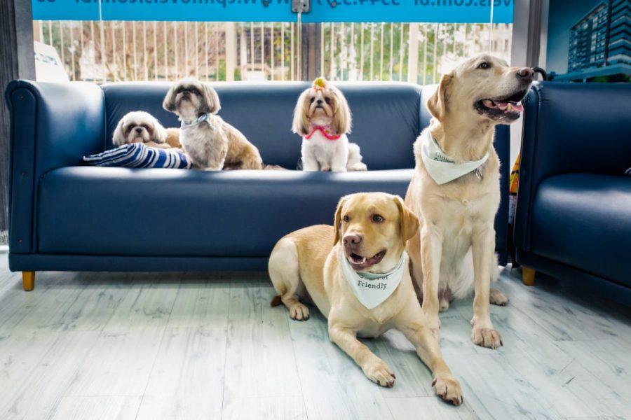 cachorros em Pet Day