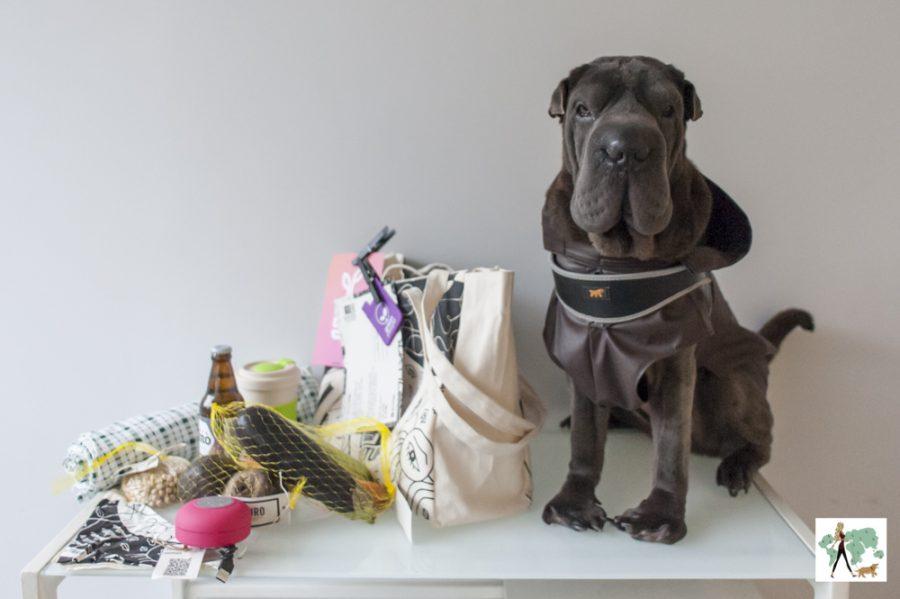 cachorro sentado em cima de mesa com kit ao lado