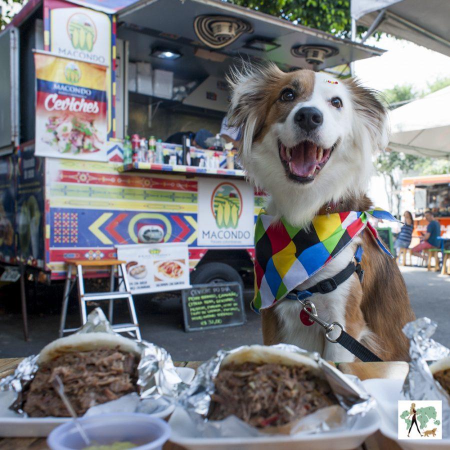 cachorro com food truck ao fundo