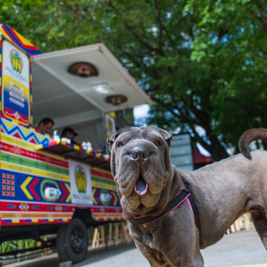 cachorro olhando para a câmera com língua para fora e food truck ao fundo
