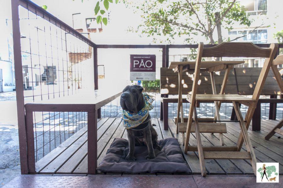 cachorro no parklet da Pão