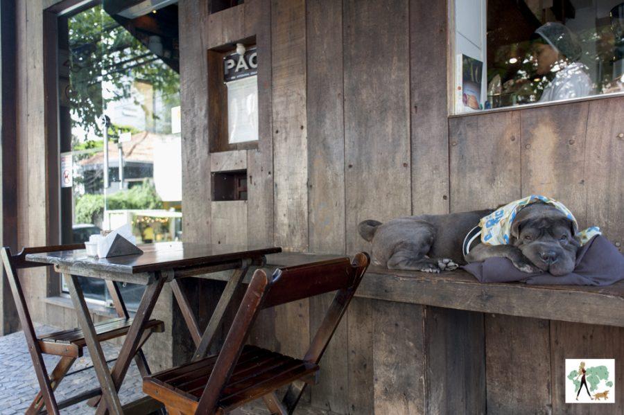 cachorro em cima de banco na padaria Pão