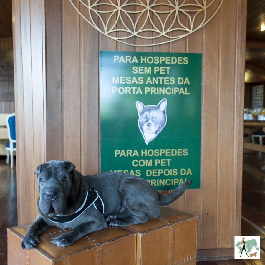 cachorro sentado na frente de uma placa verde