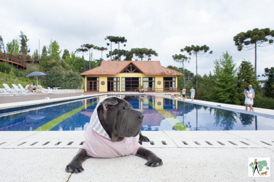 cachorro na frente da piscina