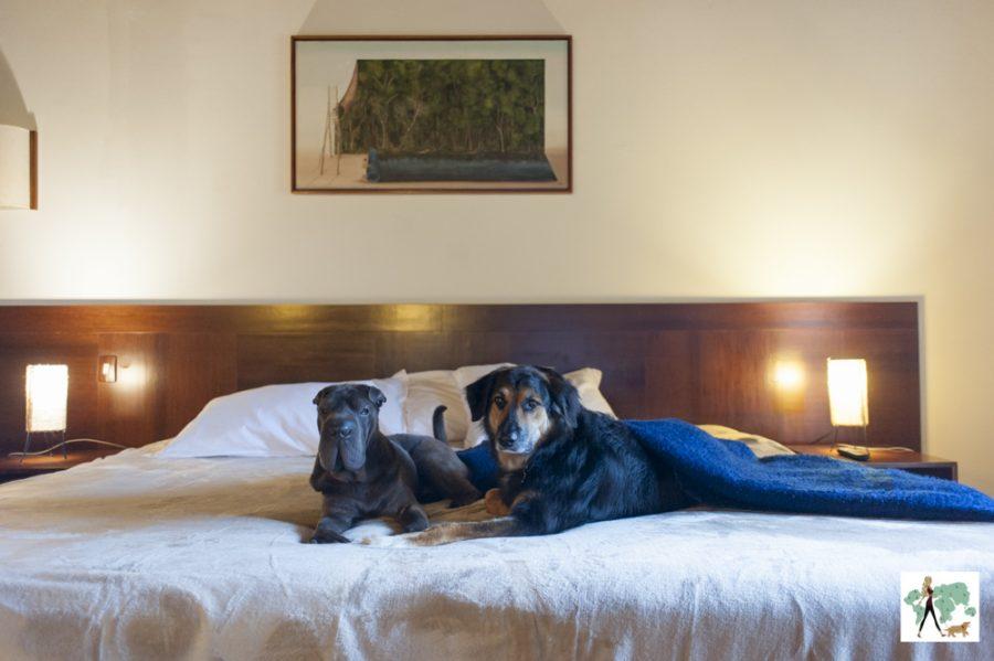 cachorros em cima de cama de hotel