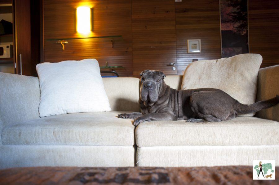 cachorro sem cima de sofá
