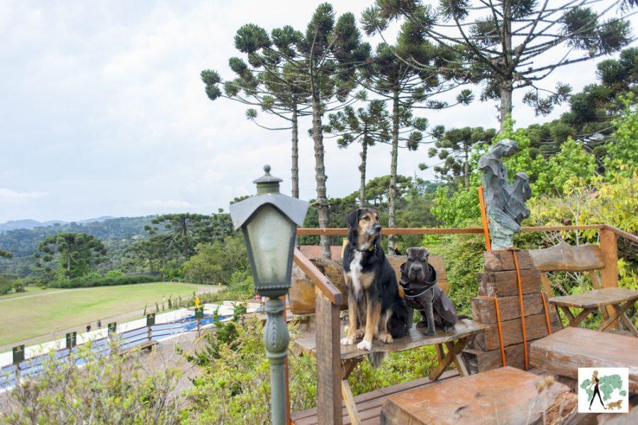 cachorros sentados em banco de hotel