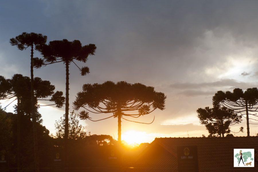 Pôr do sol entre as araucárias