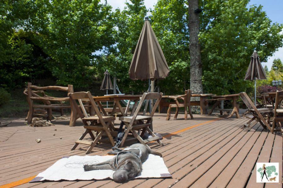 cachorro deitado no deque do hotel Sury-apan