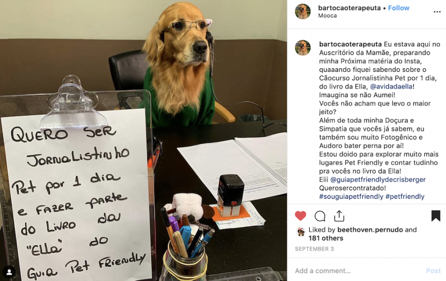 print do Instagram do Barto Cão terapeuta