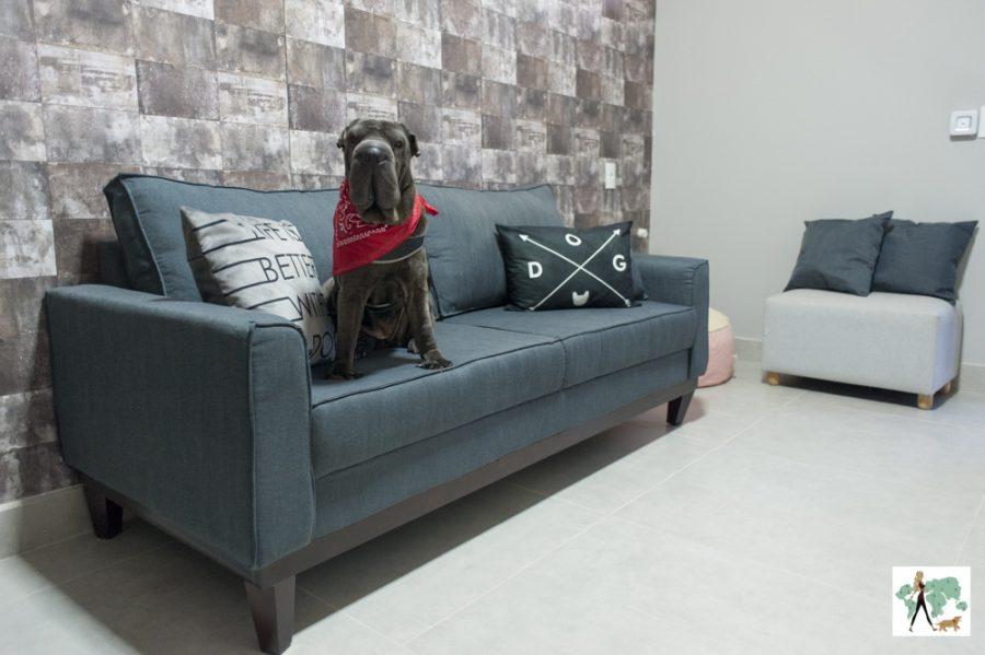 cachorro sentado em cima de sofá