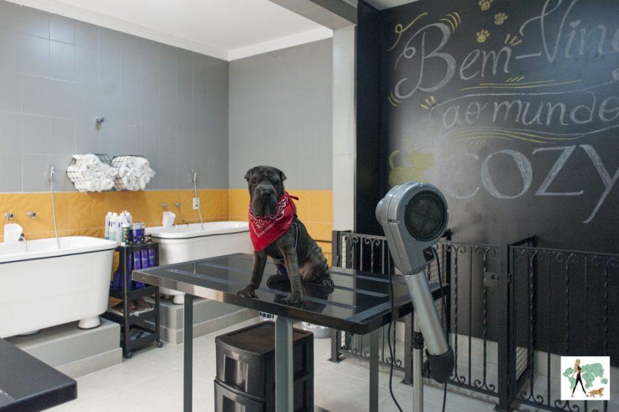 cachorro em cima de mesa de local para banhos de cães