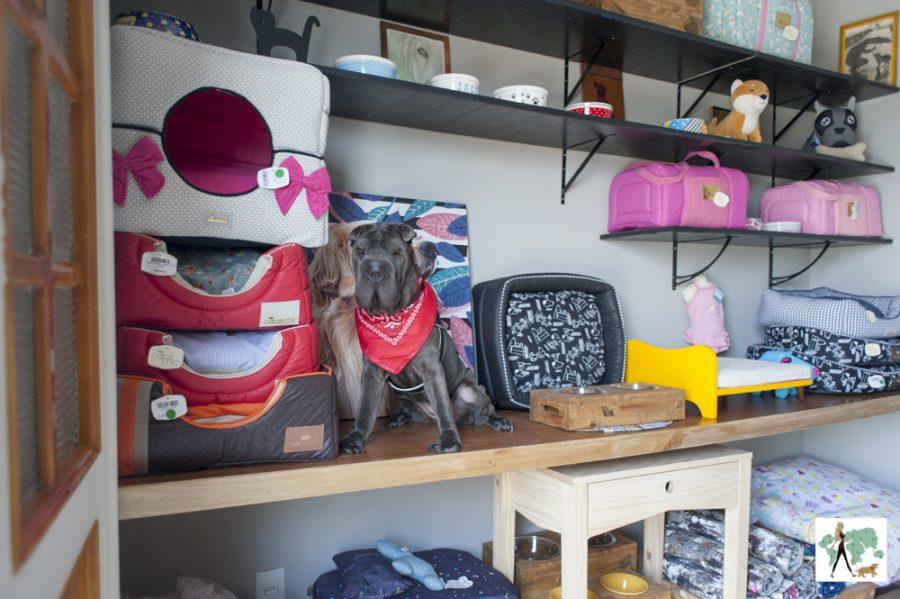 cachorro em cima de prateleira de loja