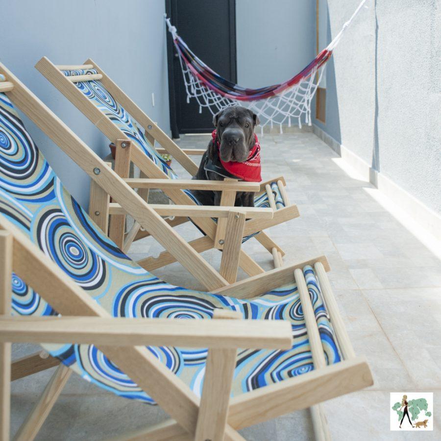 cachorro em cima de cadeira de praia dentro do pátio de casa