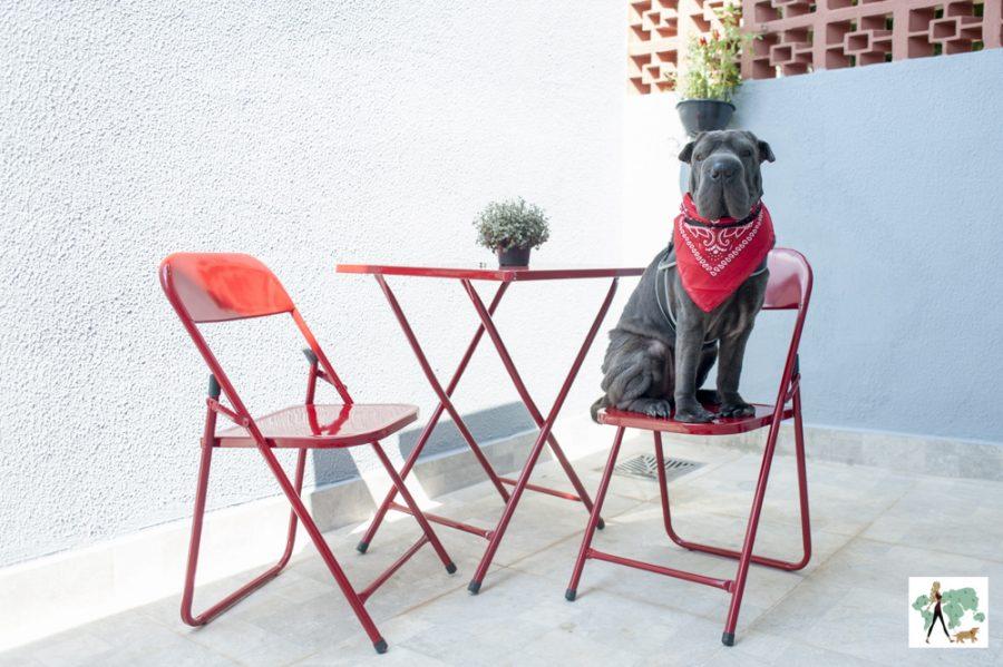 cachorro sentado em cima de cadeira vermelha