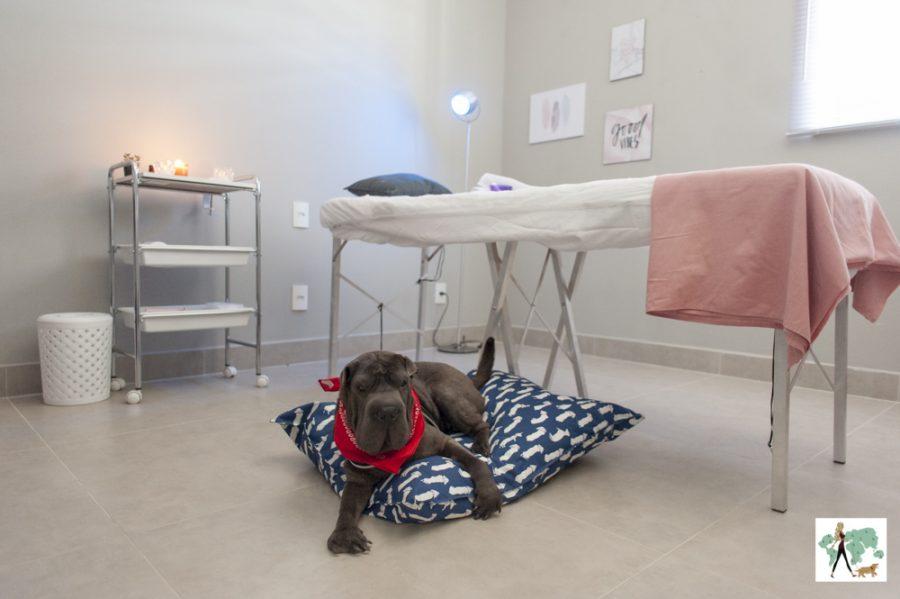 cachorro deitado em cima de almofadão